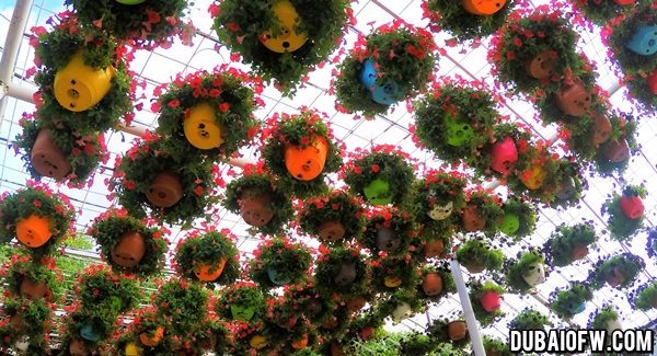 photo dubai miracle garden
