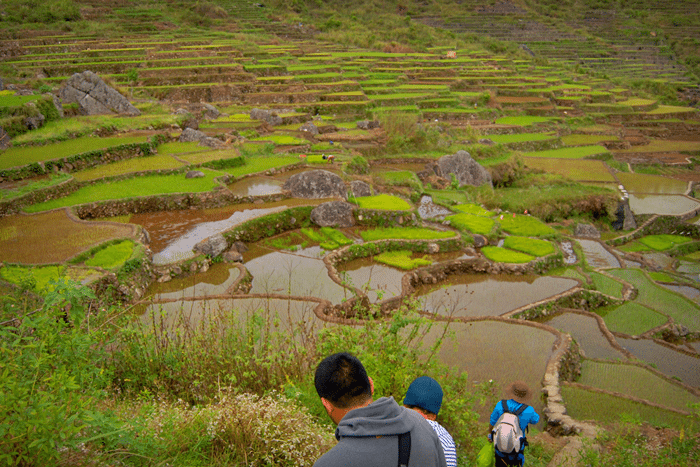 rice-fields-sagada