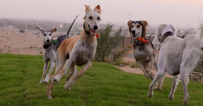 "Bark Park: The First ""Dogs Only"" Park Opens in Dubai 