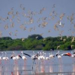 A view of the birds and mangrove forests in Ajman Image Credit: ajmantourism.ae