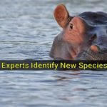 UAE Fossil Experts Identify New Species of Hippopotamus