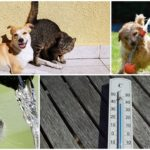 Pet-Owners Warned: Extreme Heat Poses Serious Threat