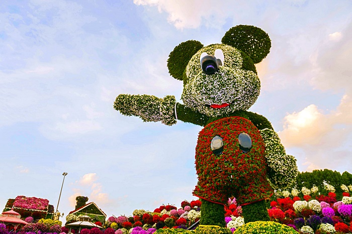 mickey mouse dubai miracle garden