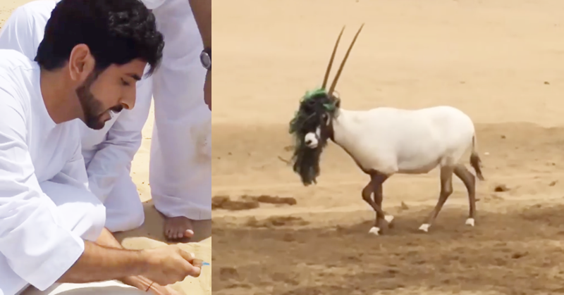dubai prince saves oryx