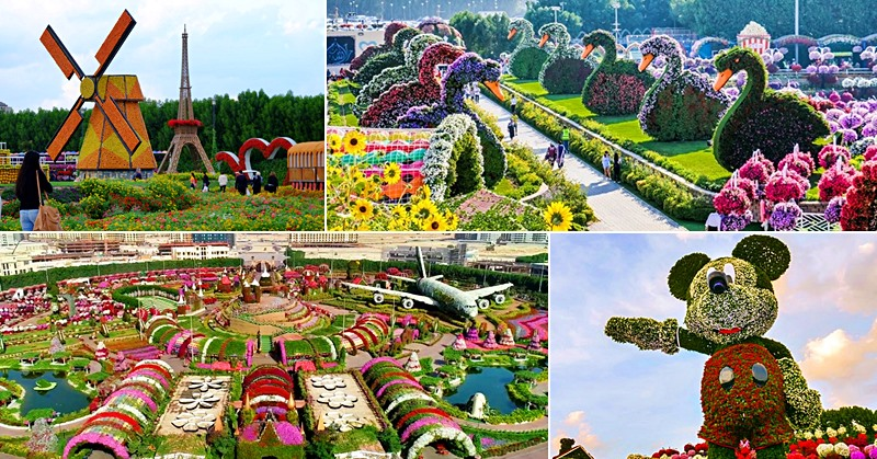 dubai miracle garden tourist spot photo