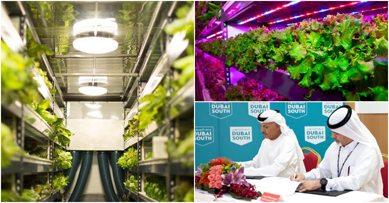 worlds largest vertical farm dubai