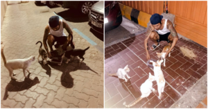 Filipino in Abu Dhabi Cares for Stray Kitties