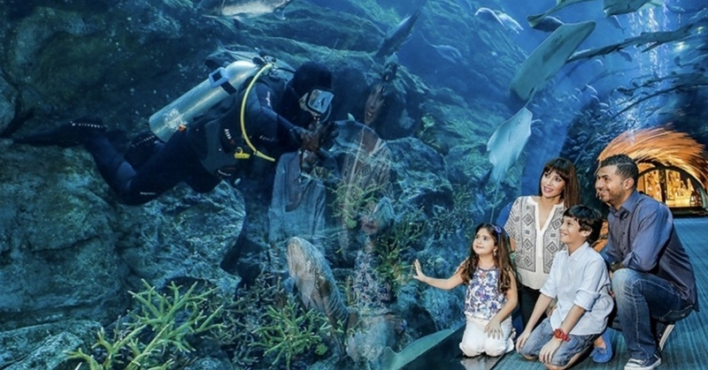 Dubai Aquarium and Underwater Zoo Voted as Best in the World – Survey