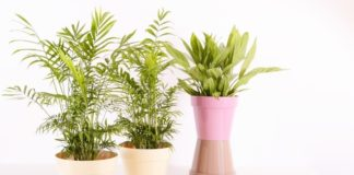 Best Places to Buy Plants in Dubai