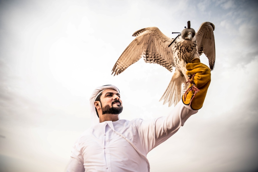 Popular Traditional Sports in the UAE
